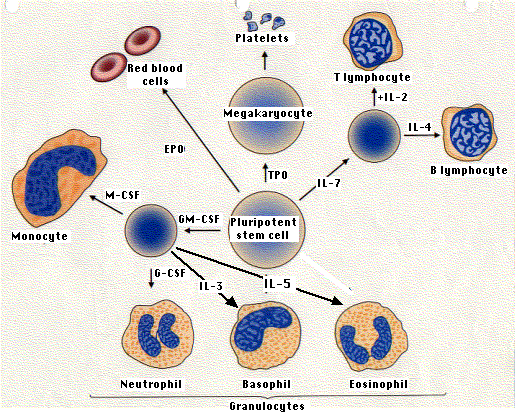 biology blood and individual labeled diagrams Labeling theory posits that our identities and behaviors are shaped by how others label us and interact with us based on the label applied labeling theory states that people come to identify and behave in ways that reflect how others label them it is most commonly associated with the sociology of crime.